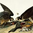 John James Audubon (1785-1851)